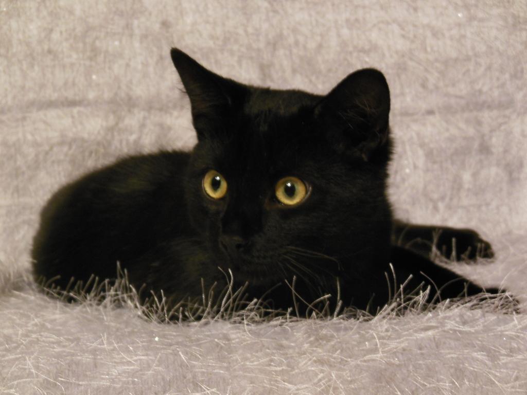 чёрные котята фото