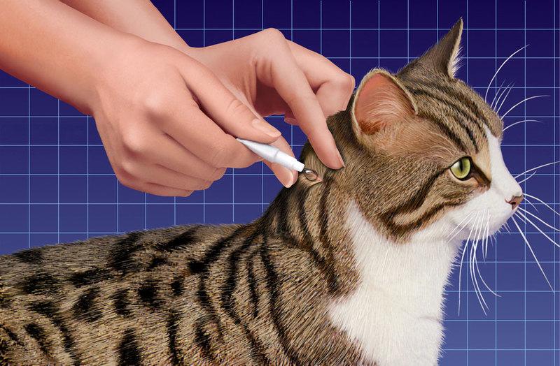 обработка от глистов котят с какого возраста