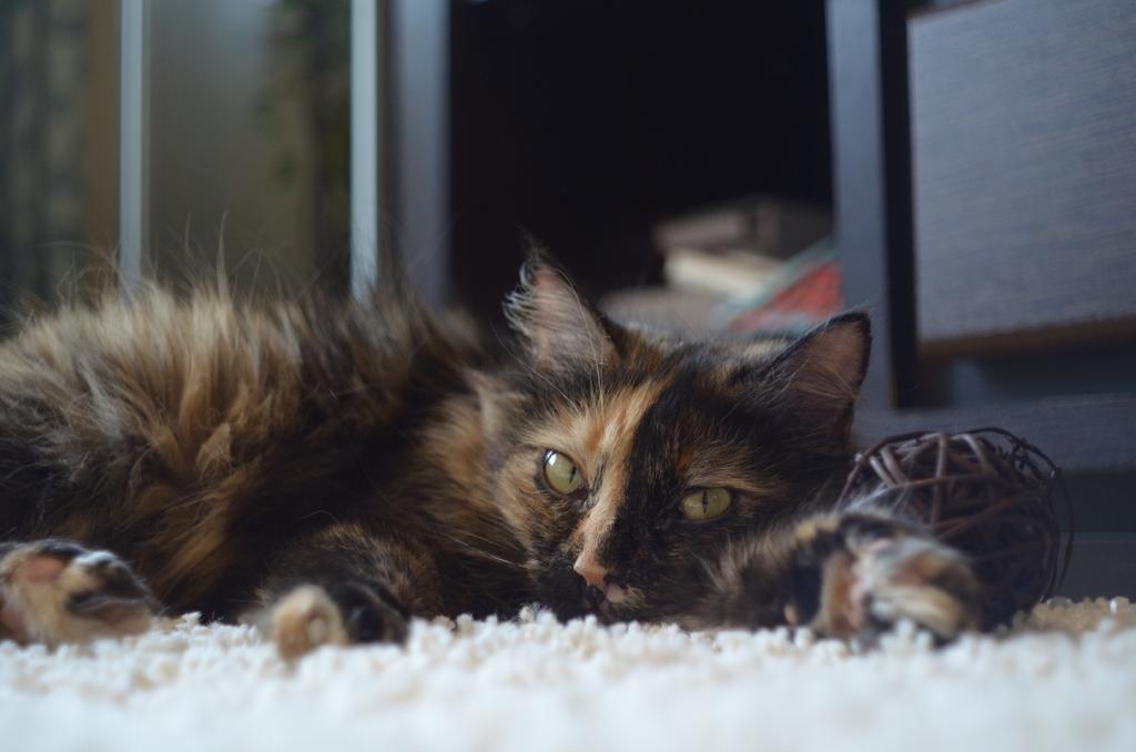 petmd cat symptoms