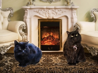 Ведущие - черные коты Мустафа и Люсьен