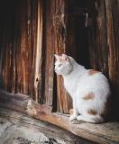 """Кот Рыжий из приюта """"О'Кош&Ко"""". Ловит мышей и кротов."""