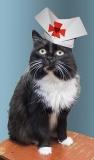 Просим помощи на ветеринарное обслуживание
