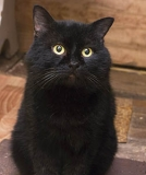 Черный мудрый кот Мустафа. Только в добрые руки в дар. Минск