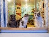 """Кошки из """"О'Кош&Ка"""""""