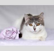 кошка Мими ищет дом