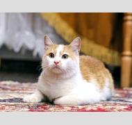 котенок Веснушкин