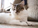 хитрый кот Матис
