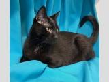 черный котик подросток Дарк