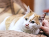 4 котенок Веснушкин в дар в добрые руки