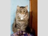 Пуся - пушистая кошка, сидит на фоне стены