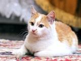 5 котенок Веснушкин в дар в добрые руки
