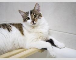 молодой кот Матис