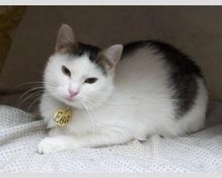 Нежная и скромная кошка Ева.