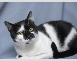 Черно-белый кот в дар в добрые руки