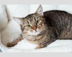 Котик Тотошка, лесного окраса, ищет дом