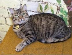 Красивая кошка лесного окраса с нефритовыми глазами Мариэтта в дар