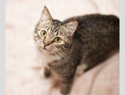 Буся-кошка инвалид в дар только самым необыкновенным хозяевам