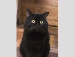Черный кот в дар