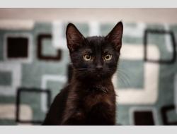 Нафаня, очаровательный черный котенок