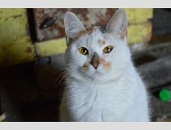 Кошка Нюся