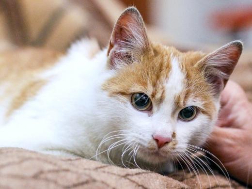 2 котенок Веснушкин в дар в добрые руки