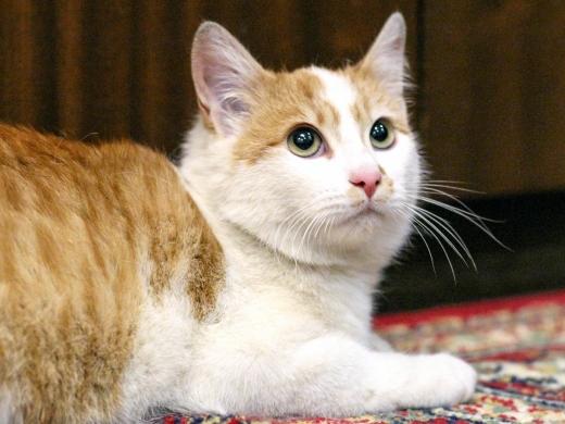 3 котенок Веснушкин в дар в добрые руки