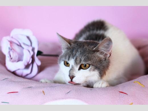 кошка Мими