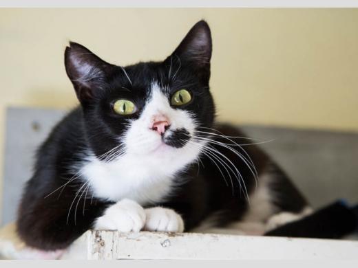 черно-белая картинка кошка