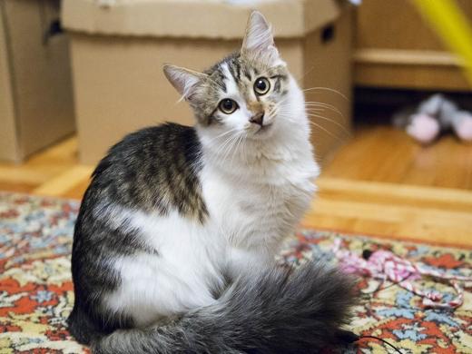 кот Матис с пушистым хвостом