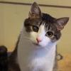 Котам из приюта нужна помощь