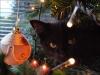 Черный кот с новогодним шариком