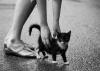 Вы нашли на улице бездомного котенка. Что делать?